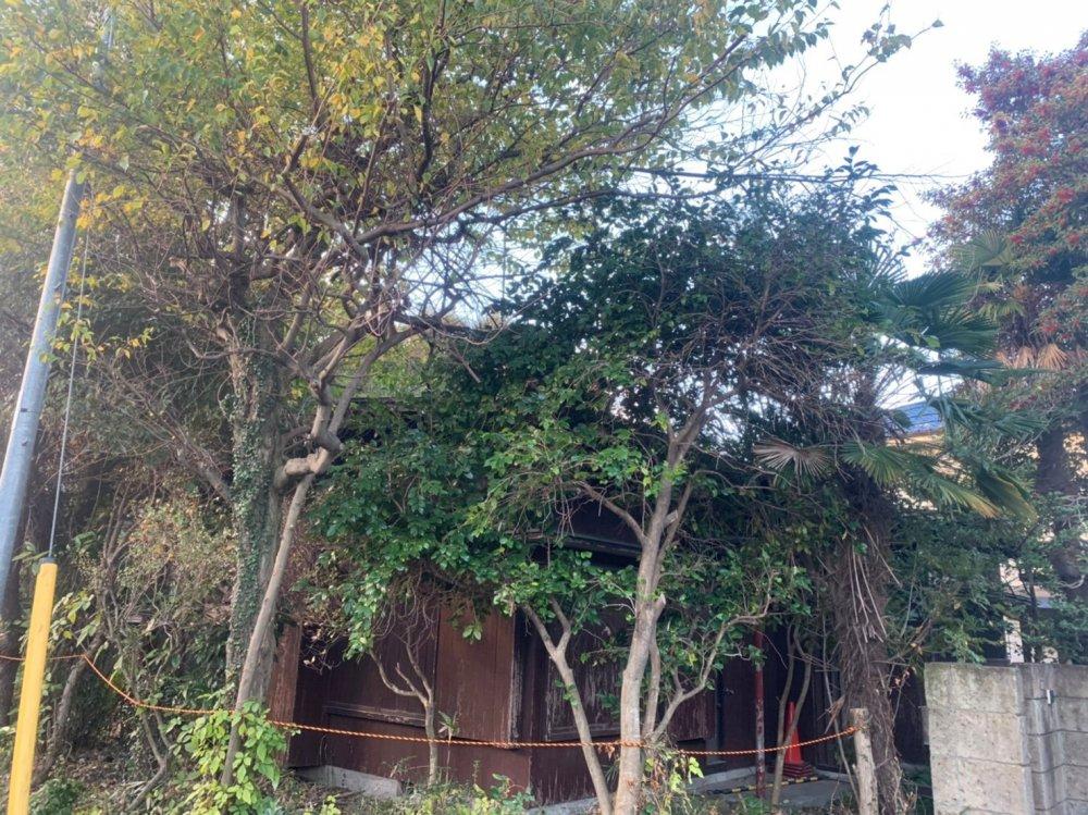 東京都府中市栄町の木造平家解体工事+植栽撤去 施工事例