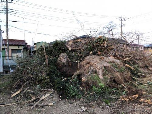 川越市小室  木造3棟+植栽の解体工事植栽の撤去